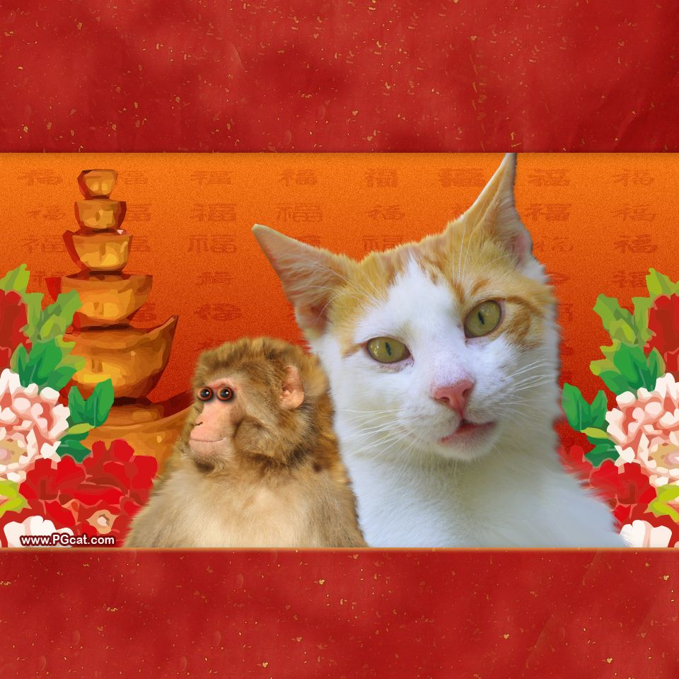 happy lunar chinese new year greeting templates with ginger cake and pg cat