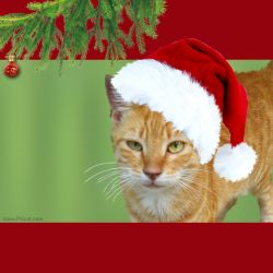 Cristmas and New Year Greeting Cards Templates Ginger 1