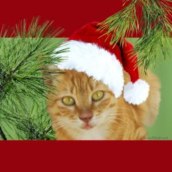 Cristmas and New Year Greeting Cards Templates Ginger 3